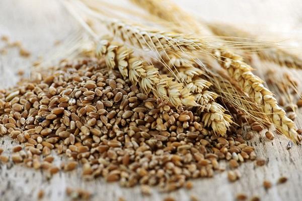 grano-siciliano-antico-Nerisi